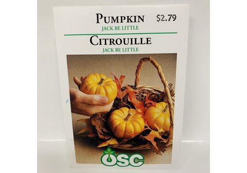OSC Pumpkin Jack Be Little