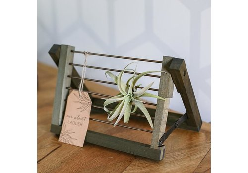 "Natural Green Wooden Air Plant Ladder 9""x6"""