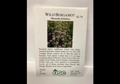 OSC Wild Bergamot Monarda Fistulosa