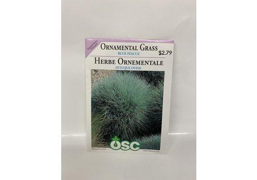 OSC Ornamental Grass Blue Fescue