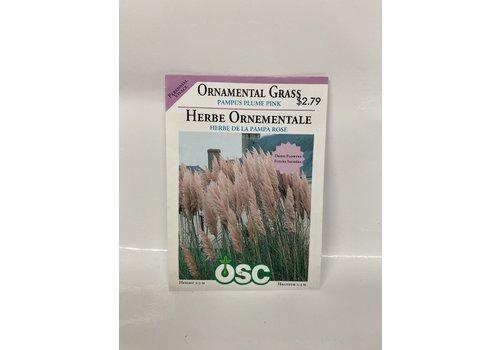 OSC Ornamental Grass Pampus Plume Pink