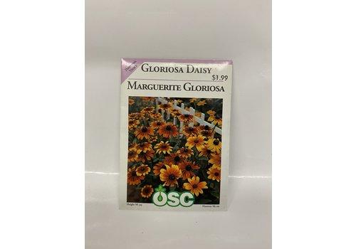 OSC Daisy Gloriosa