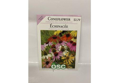 OSC Coneflower Paridosa