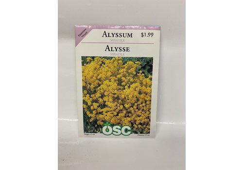 OSC Alyssum Saxatile