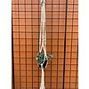 """Primitive Planters Twisted Cord Cotton Woven Plant Hanger 42"""""""