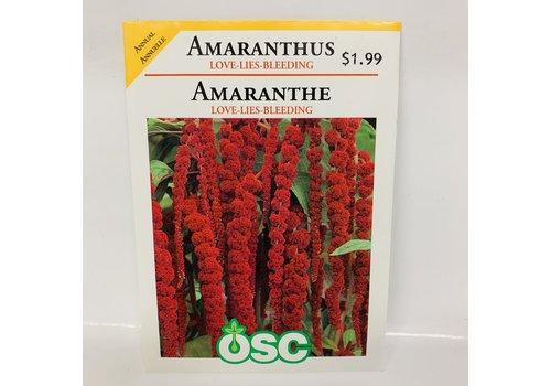 OSC Amaranthus Love Lies Bleeding