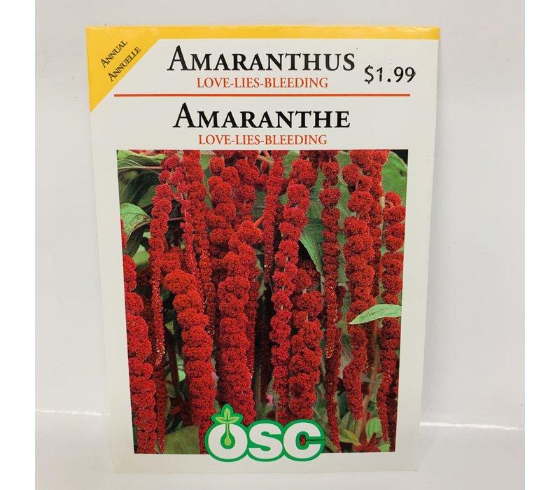 Amaranthus Love Lies Bleeding