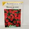 OSC Four O'Clock Rose