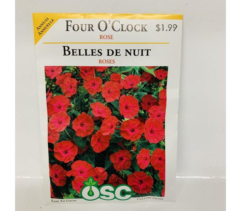Four O'Clock Rose
