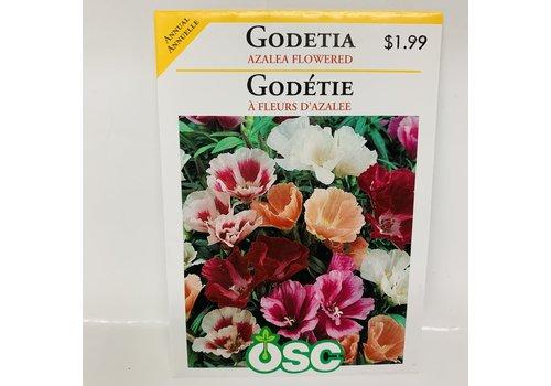 OSC Godetia Azalea Flower Mix