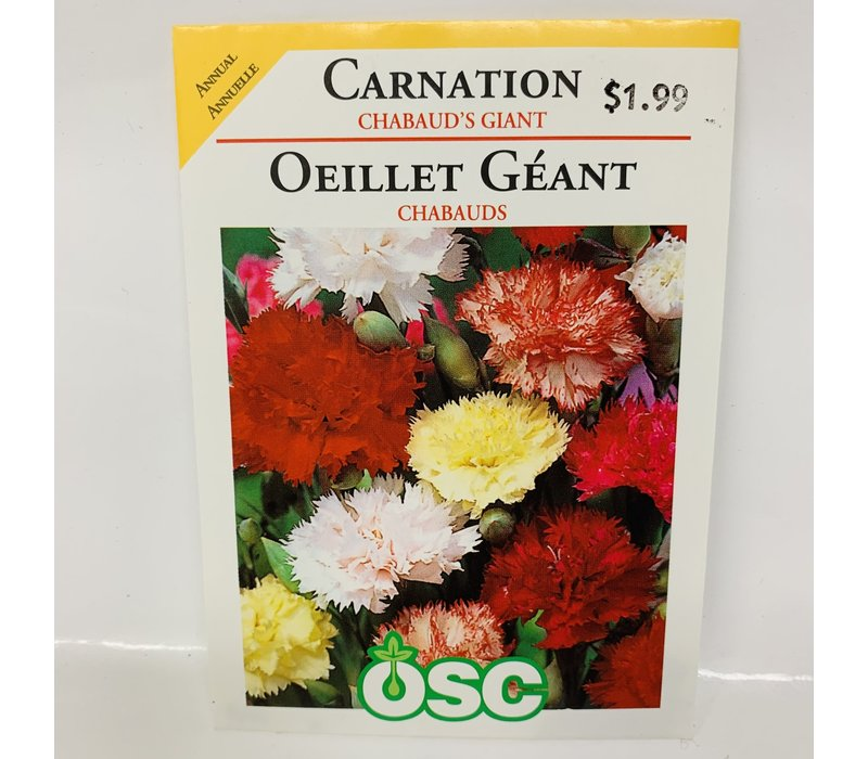 Carnation  Chabauds Giant