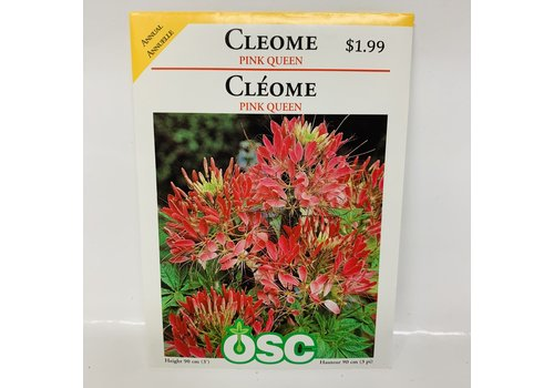 OSC Cleome Pink Queen