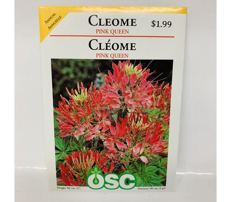 Cleome Pink Queen