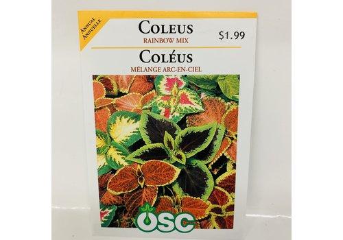 OSC Coleus Rainbow Mix