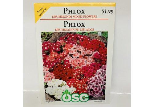 OSC Phlox Drummondii Mix