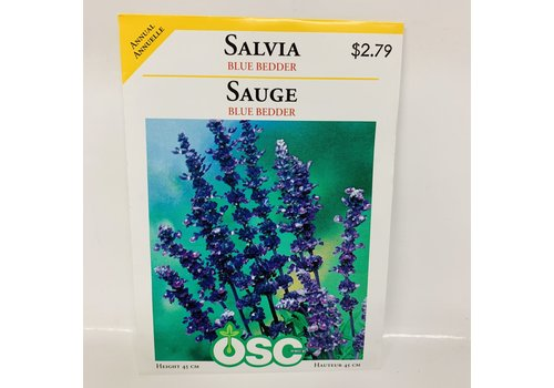 OSC Salvia Blue Bedder