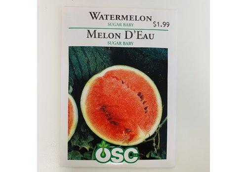 OSC Watermelons Sugar Baby