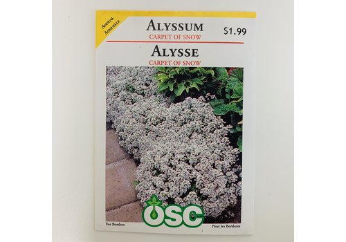 OSC Alyssum Carpet Of Snow