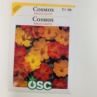 Cosmos Bright Lights