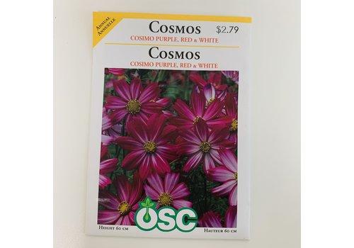 OSC Cosmos Cosimo