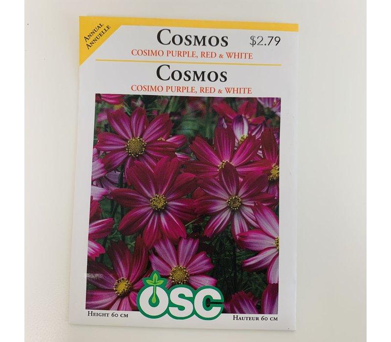 Cosmos Cosimo