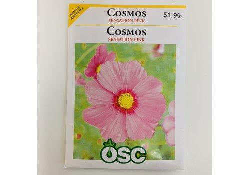 OSC Cosmos Sensation Pink