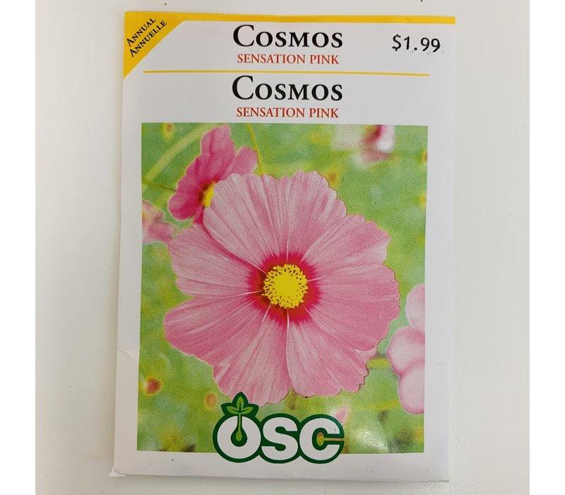 Cosmos Sensation Pink