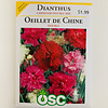 OSC Dianthus Chinensis Double