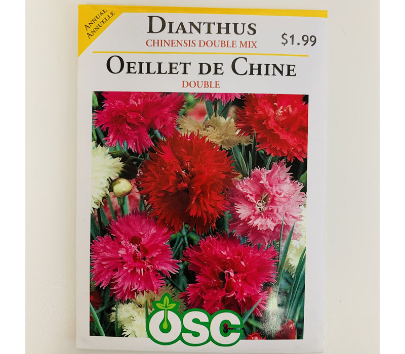 Dianthus Chinensis Double