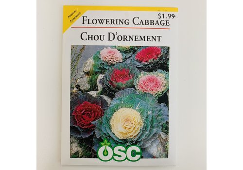 OSC Flowering Cabbage