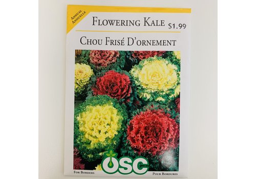 OSC Flowering Kale