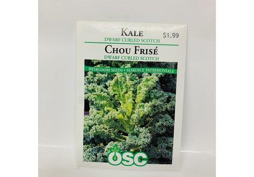 OSC Kale Dwarf Curled Scotch