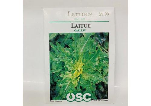 OSC Lettuce Oakleaf
