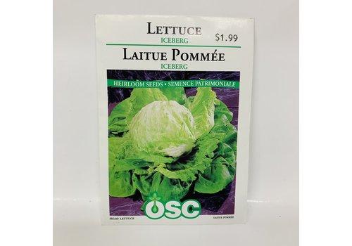 OSC Lettuce Iceberg