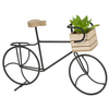 Bicycle With Succulent Pot
