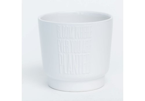 "Bloom Where Ever You Are Planted White Glazed Dolomite Pot 6.5""x5.5"""