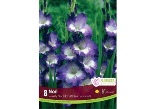 Gladiolus Dutch Nori Bulbs