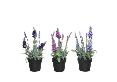Kaemingk Lavender In Pot 12x12x25cm