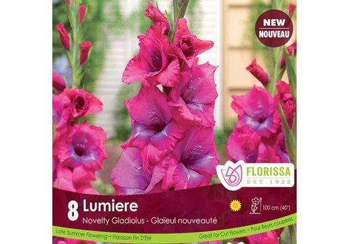 Gladiolus Dutch Lumiere