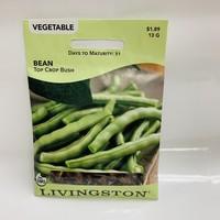 Bean Topcrop Green
