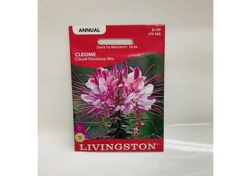 Livingston Cleome Color Fountain Mix
