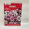 Livingston Cosmos Sensation Picotee