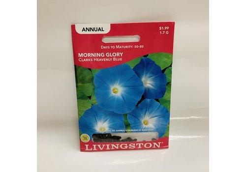 Livingston Morning Glory Heavenly Blue LV
