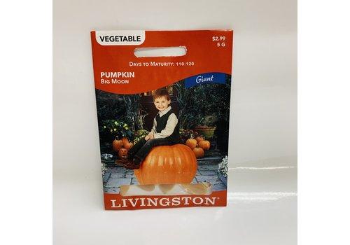 Livingston Pumpkin Big Moon