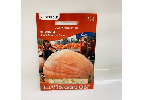 Livingston Pumpkin Dill's Atl Giant