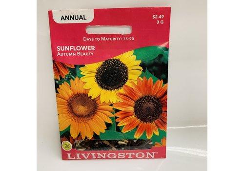 Livingston Sunflower Autumn Beauty LV