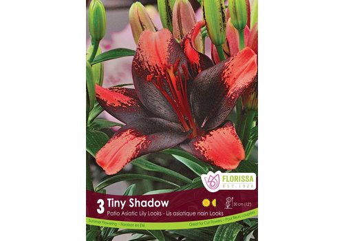 Lily Pot Tiny Shadow Package