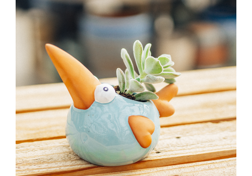 Dutch Growers Angry Bird Rick Potted Succulent