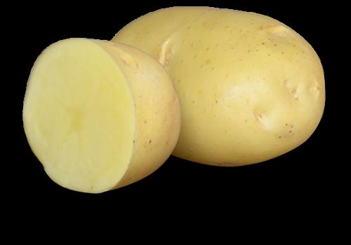 Earth Apples Gold Eye Seed Potatoes