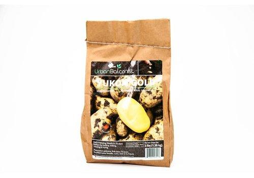 Earth Apples Yukon Gold Urban Balconist Seed Potatoes